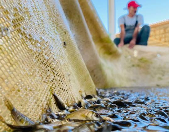 Şanlıurfa Balıkçılıkta İddialı