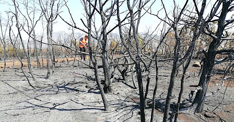 Tunceli'deki yangının ardından